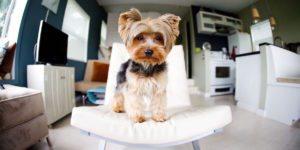 Pet Friendly Rentals